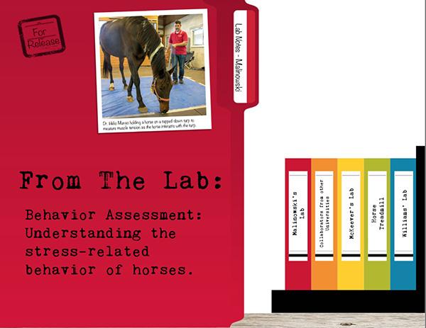 From the Lab: Behavior Assessment- Understanding Stress-Related Behavior of Horses