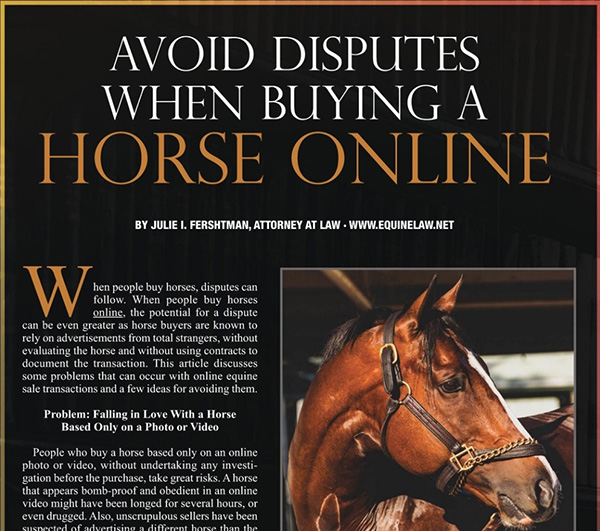 Avoid Disputes When Buying a Horse Online