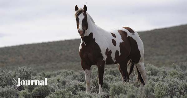 Stay in the Know With APHA News