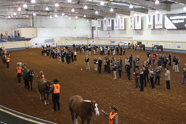 AQHA World Championship Collegiate Horse Judging Contest
